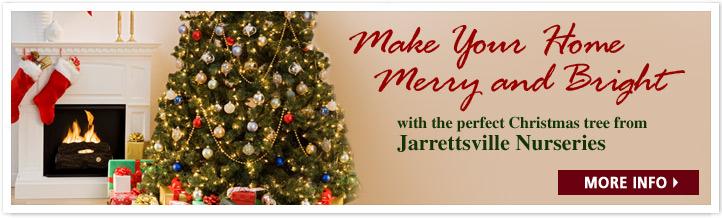 Get your perfect Christmas Tree at Jarrettsville Nurseries